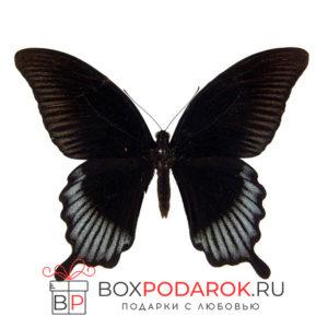 Бабочка Лови
