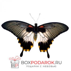 Бабочка Лёви