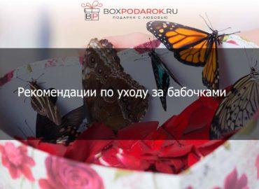 Рекомендации по уходу за бабочками