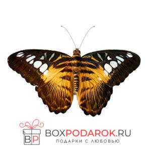 Бабочка Сильвия