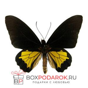 Бабочка Тройдес