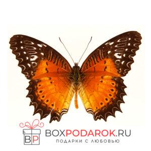 Бабочка Библис