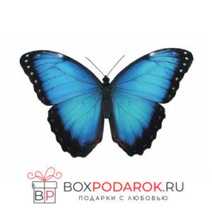 Бабочка Морфо